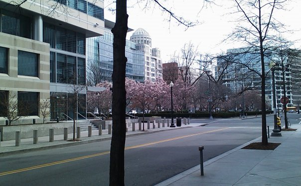 Murrow Park, Outside the IMF Building, with Cherry Trees in late March 2009