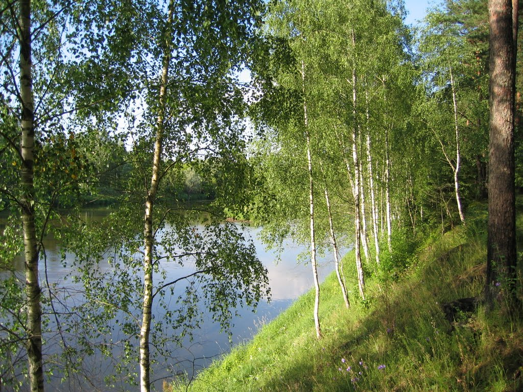 Birches on Neris riverside