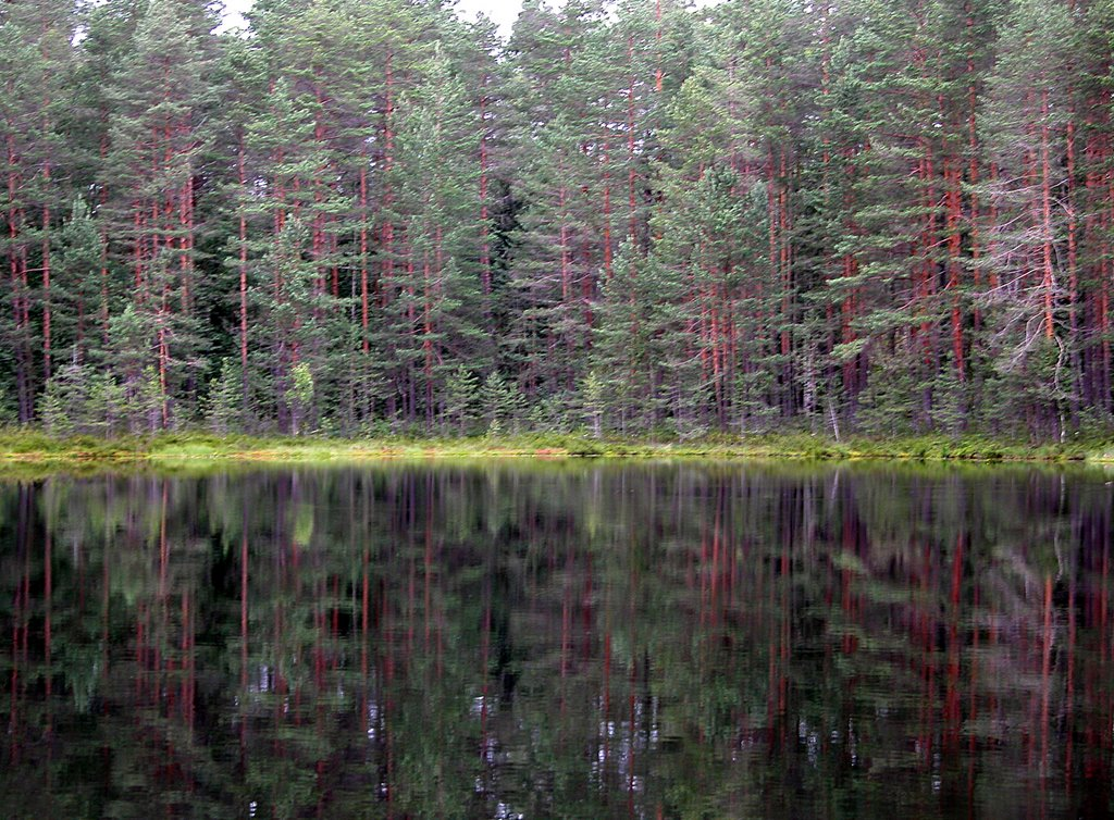 A forest pond