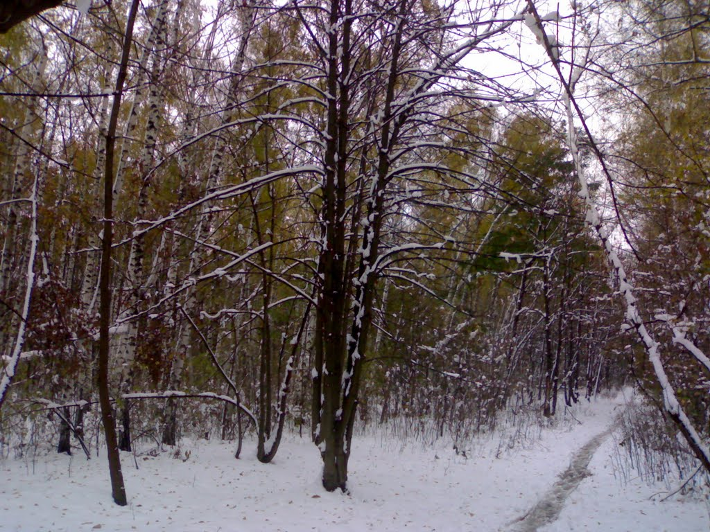 The  autumn snow snakes in Rostov-on-Don. All snow snakes are under the TAG of 'snow snakes'. Welcome!