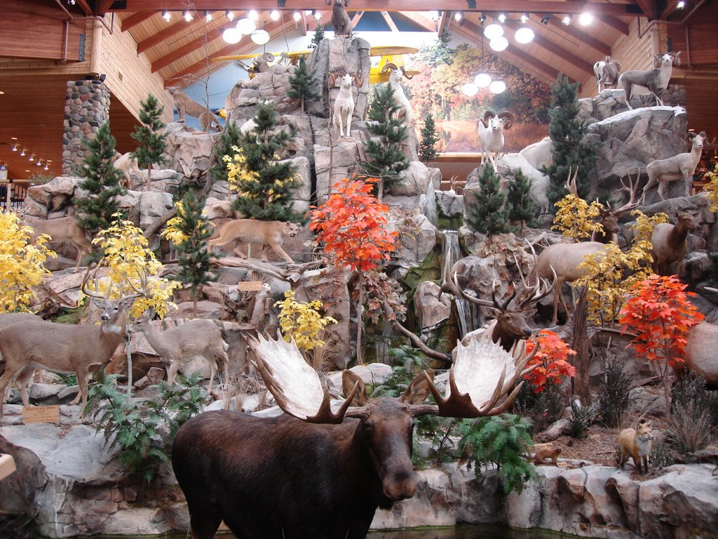 Cabela's animal display