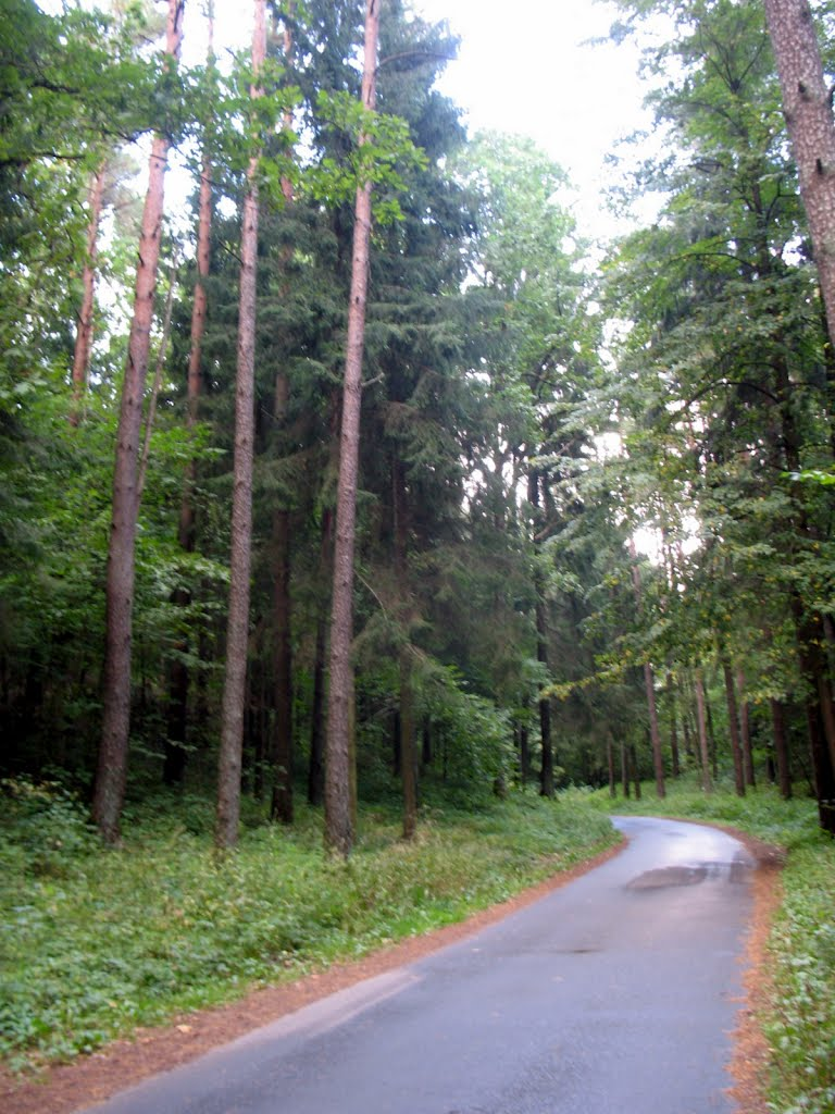 Панарскі лес. Narrow road in Paneriai forest